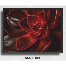 AGL1-007