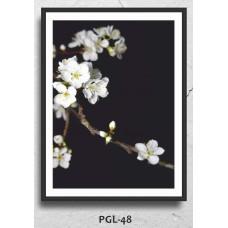 PGL-48