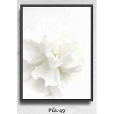 PGL-49