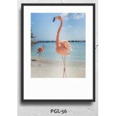 PGL-56